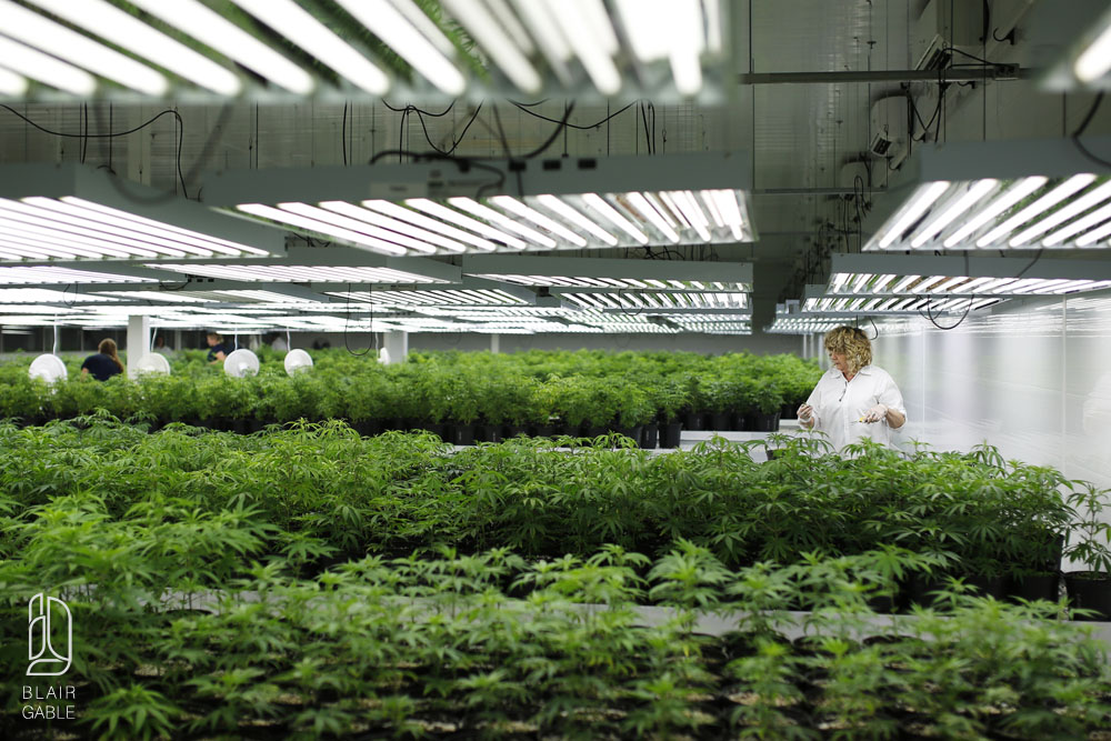 Canadian medical marijuana company Tweed